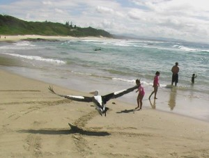 Nambucca Heads holiday rentals - holiday lettings. Mid North Coast accommodation near Valla Beach - pelican