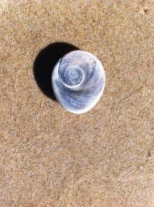 Nambucca Heads holiday rentals - holiday lettings. Mid North Coast accommodation near Valla Beach - Operculum of Gastropod